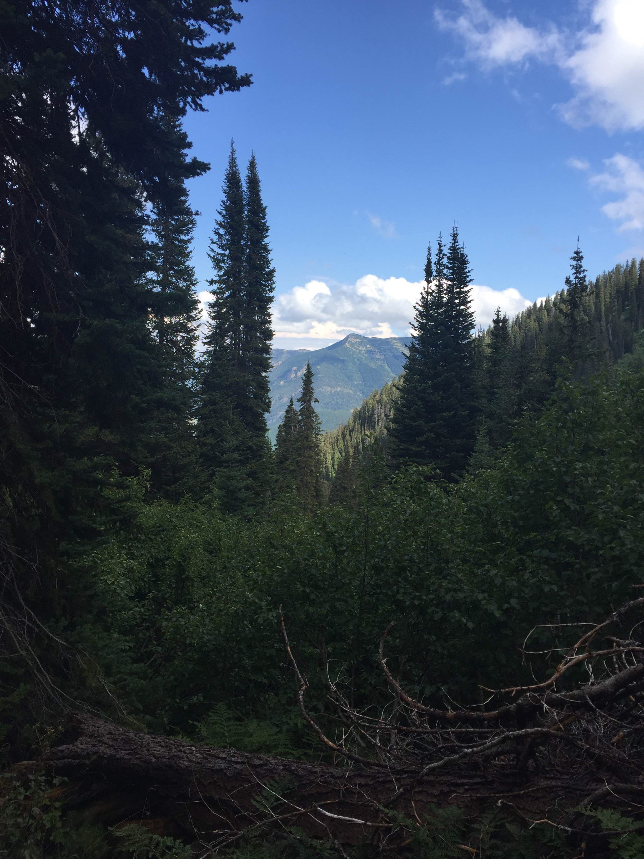 Marion Lake Trail, Great Bear Wilderness, Essex MT